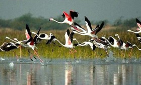Bharatpur – A Bird Watcher's Paradise, wonderful place to visit in November