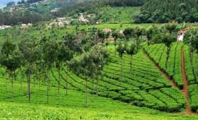 A weekend holiday trip to Coonoor