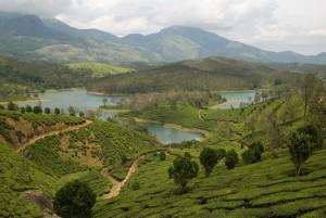 Tea gardens everywhere