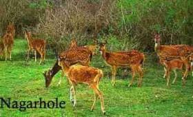 A weekened getaway to Nagarhole National Park