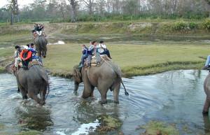 elephant-safari1