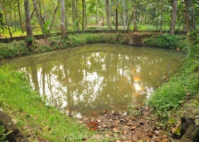 Kuttickattil Gardens Homestay, Kottayam