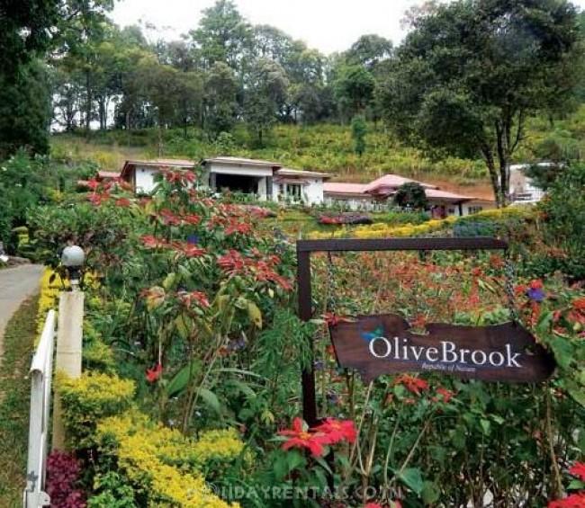 Olive Brook Resort, Munnar