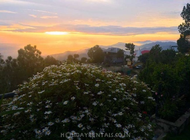 The Mystic Pines Homestay, Kasauli