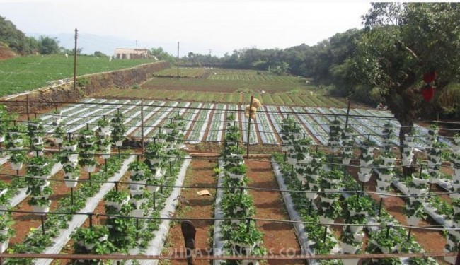 Holiday cottages near Metgutad, Mahabaleshwar