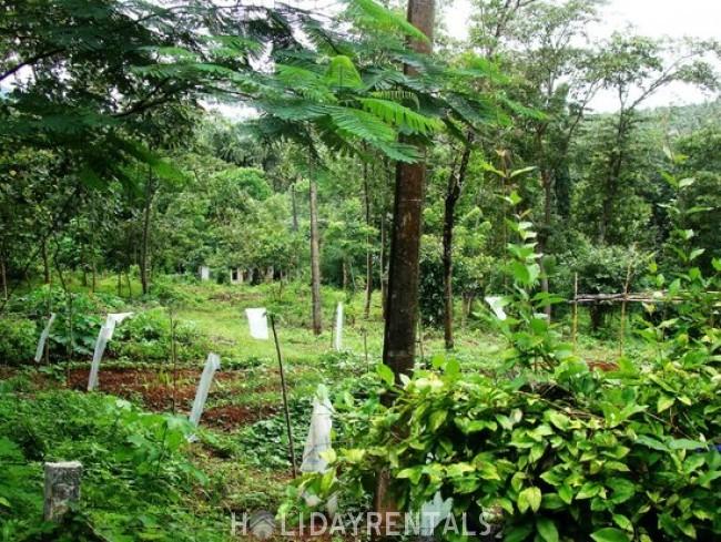 Homestay near Malampuzha Gardens, Palakkad