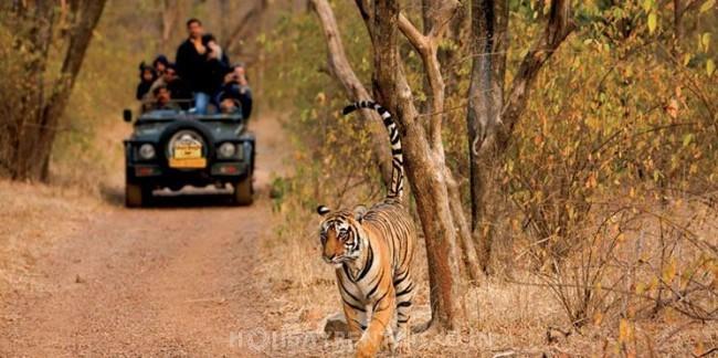 Ranthambore Wildlife Resort, Sawai Madhopur