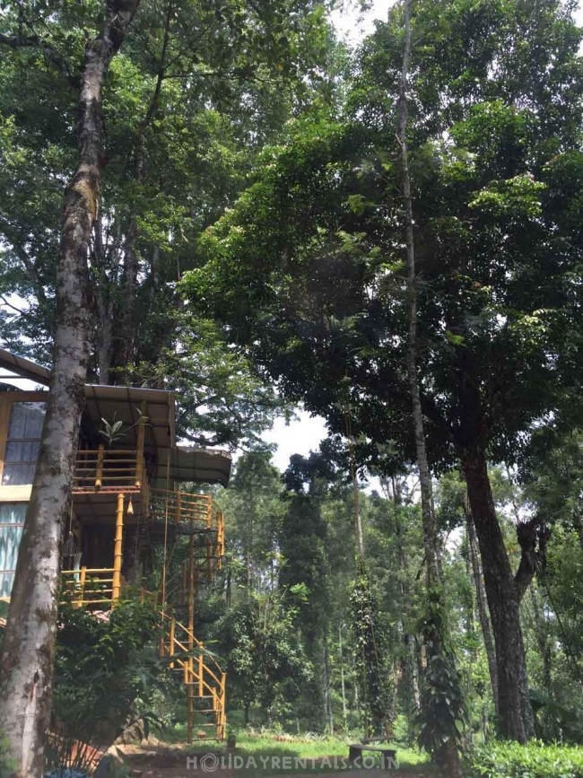 Jungle Treehouse, Munnar