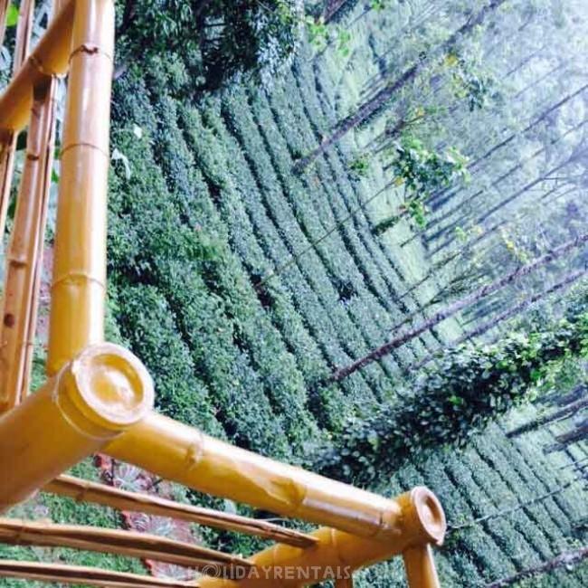 Jungle Treehouse, Munnar