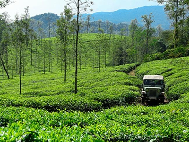Tea Estate View Bungalow, Wayanad