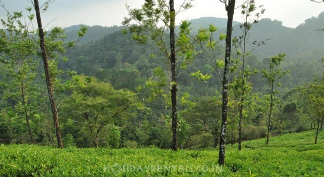 Tea Plantation View Stay, Wayanad