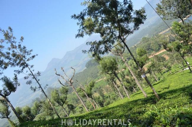 Stay Near Karadipara View Point, Idukki