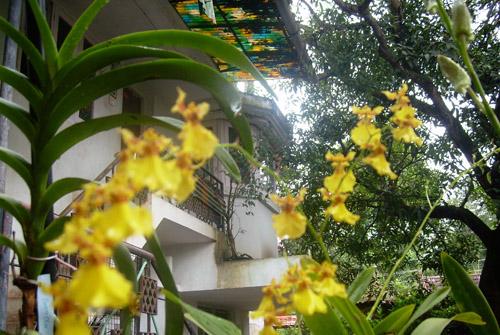 Casa Mia Homestay, Kochi