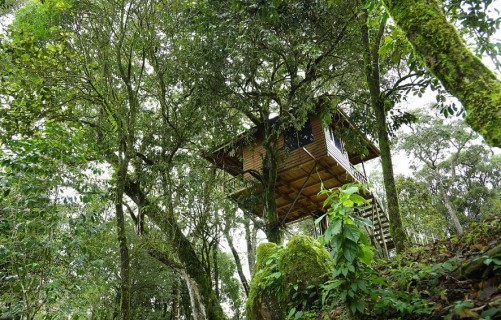 Nature Zone Jungle Resort, Munnar