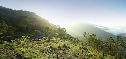Nature Zone Jungle Resort, Munnar
