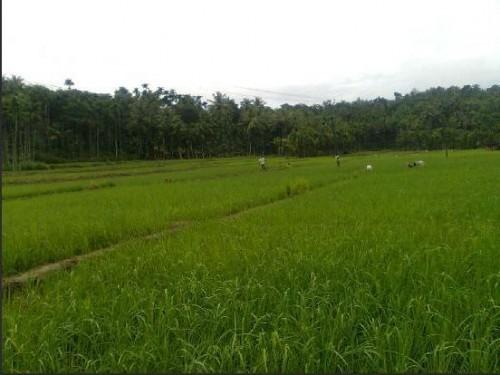 Spice garden Homestay, Wayanad