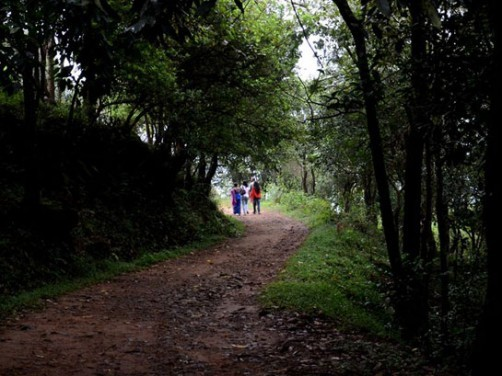 Tea Route Homestay, Wayanad